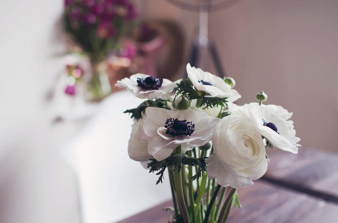 anemonen ranunkeln anna frost