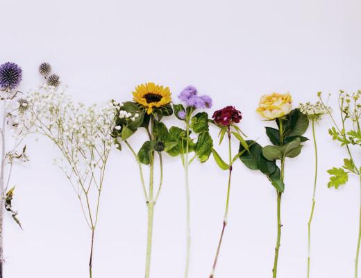 flowers flatlay august